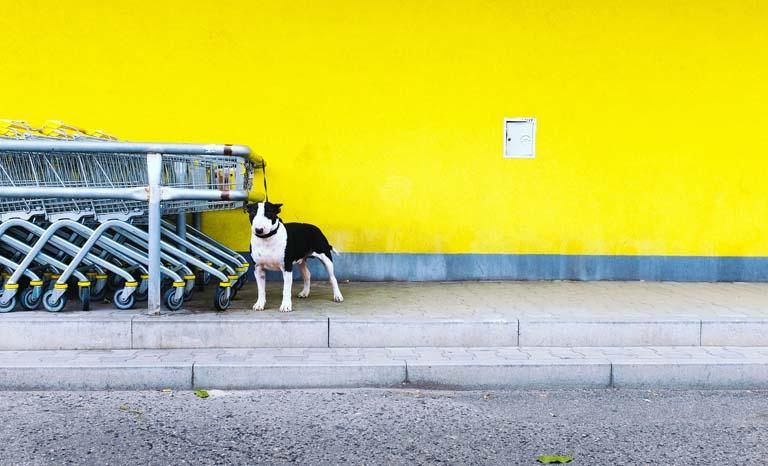 Black & Yellow - Day 58